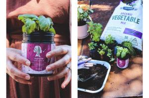Bestow Herb Garden - Bestow Sustainability Journey - Tauranga, NZ